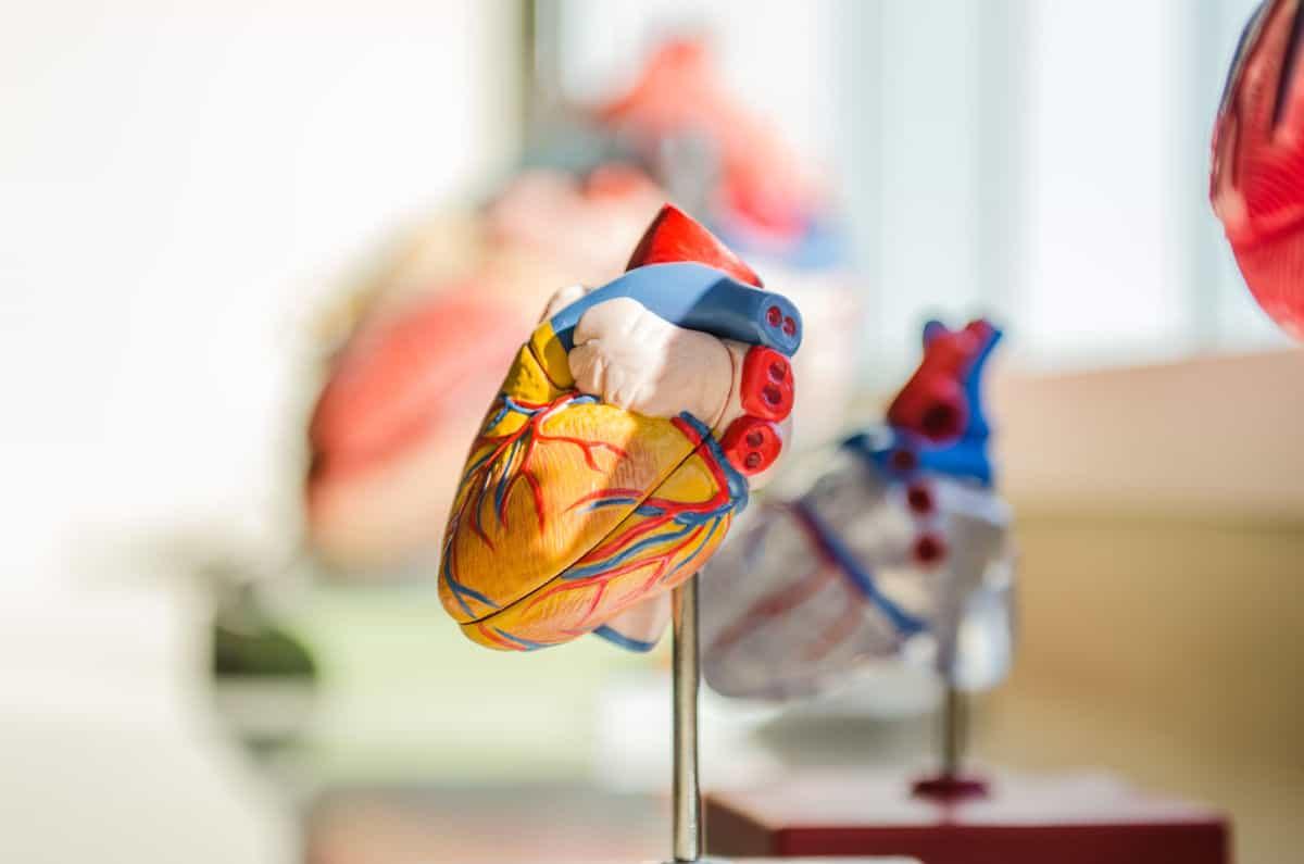 come misurare la pressione sanguigna a casa anatomia del cuore