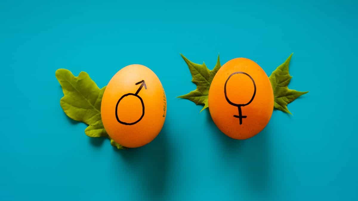 aumentare testosterone uova con segno maschio e femmina